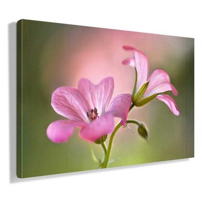 πινακας-σε-καμβα-ροζ-λουλουδια